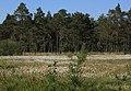 Offenlandbereich im Naturschutzgebiet Schnaakenmoor (2018-05-27 WDPA ID 82537).jpg