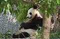 Oji zoo, Kobe, Japan (34056095263).jpg