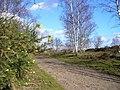 On Kingsley Common - geograph.org.uk - 353232.jpg