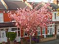 Orchard Rd, SUTTON, Surrey, Greater London (4).jpg