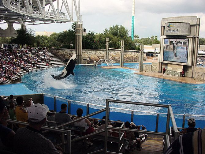Kalina at SeaWorld Orlando in 2002