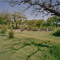 Overzicht moestuin, met onder andere restanten van kassen - Vogelenzang - 20406310 - RCE.jpg