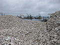 Oyster shells at Nahcotta port,WA.JPG