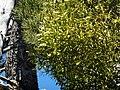 PALLISSA DE CAL XIFRÉ - VALLBONA - IB-704.jpg