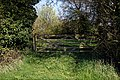 Paddock gate on Fountain Road, Good Easter, Essex.jpg