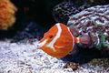 Palma Aquarium -Pez cofre.jpg