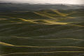 Palouse hills in may 2010.jpg