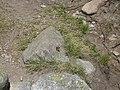 Papallona entre l'estany de Malniu i el Prat Fondal P1300493.jpg