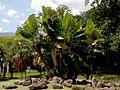 Parque del Este 2012 088.JPG