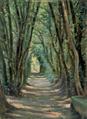 Parque do Fontelo - Alameda de Árvores (1907) - José de Almeida e Silva.png