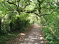 Path across Bull Cliff - geograph.org.uk - 2583747.jpg