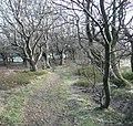 Path through the wood, Barkisland - geograph.org.uk - 731626.jpg