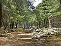 Phaselis - panoramio (14).jpg