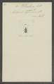 Phloeobius - Print - Iconographia Zoologica - Special Collections University of Amsterdam - UBAINV0274 031 03 0030.tif