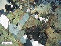 Photomicrograph of Orthogneiss.tif