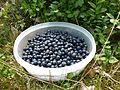 Picking blueberries c.JPG