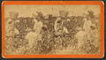 Picking cotton, from Robert N. Dennis collection of stereoscopic views.png