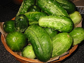 Cucumber - Pickling cucumbers