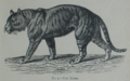 Picture Natural History - No 2 - The Tiger.png