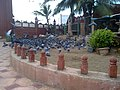 Pigeons area in dargah - panoramio.jpg