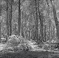 PikiWiki Israel 14789 Menashe Forests.jpg
