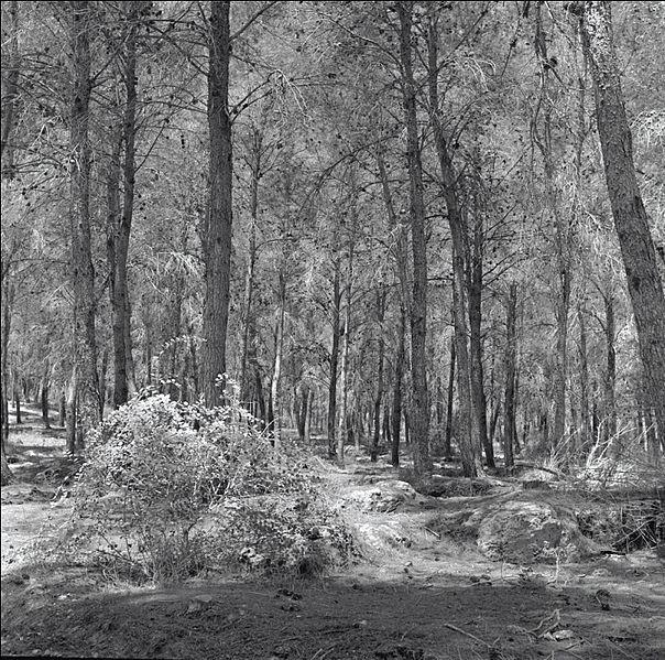 יערות מנשה