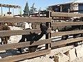 PikiWiki Israel 47753 Alpaca Farm.JPG