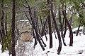 Pinar ^ Nieve - panoramio (16).jpg
