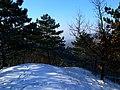 Pine view - panoramio.jpg