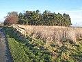 Pinewood near Seaton Bank Top - geograph.org.uk - 314336.jpg