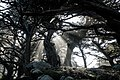 Point Lobos State Natural Reserve 1 18 19 (32936826638).jpg