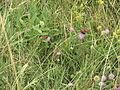 Polínka, motýl I.jpg