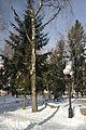 Poltava Birch Grove.JPG