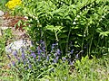 Poltava Botanical garden (104).jpg