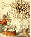 Popular history of the aquarium of marine and fresh-water animals and plants (1857) (14789543653).jpg