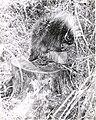Porcupine (5188022054).jpg