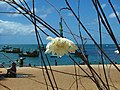 Praia do Forte - Bahia.JPG