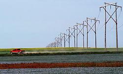 Prairie Rainbow Canola Flax.jpg