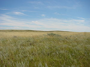 Brooks, Alberta - Prairie southwest of Brooks