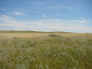 Northern short grasslands Grassland ecoregion in Canada and the United States
