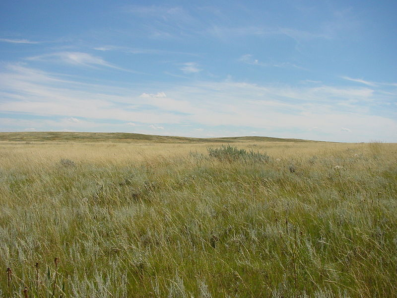 File:Prairie near Brooks.JPG