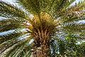 Preveli Palm Trees 02.JPG