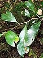 Protea Robertson Nature Reserve.jpg
