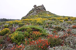 Pt. Lobos flower tower.jpg