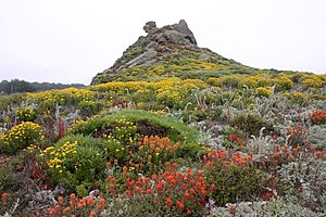 Point Lobos - Wildflowers at Pt. Lobos, 2006