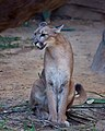 Puma (6024252174).jpg