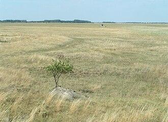 Pannonian Steppe - Pannonian steppe in Seewinkel