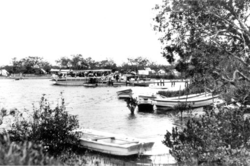 Queensland State Archives 1134 Excursion Lanches Maroochy River January 1931.png