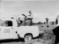 Queensland State Archives 1721 Department of Agriculture and Stock Cattle Husbandry Branch field day at a farm in the Upper Coomera Gold Coast August 1954.png