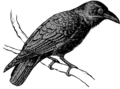 Raven 1 (PSF).png